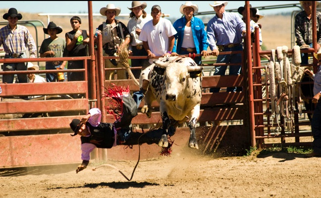 The Crow men are Rough Riding. Crow Fair and Rodeo.