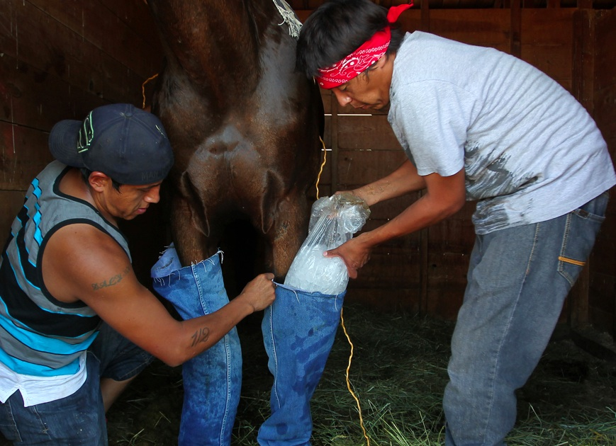 Jasper Half Jr., left, and his brother, Chico, apply ice to the front legs of one of their horses prior to the annual World Champion Indian Relay Races on Wednesday, July 10, 2013 in Sheridan, Wyo. Blaine McCartney:Wyoming Tribune Eagle.