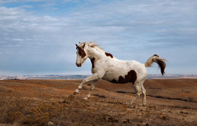 """A paint horse named Cikala, which means """"Little"""" in Lakota. Photo by Erika Larsen."""