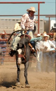 Wild Bucking Broncos at the Crow Fair and Rodeo. Photo-visitmt.com