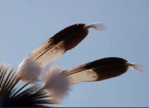 Native medicine. Photo- Native News Today.