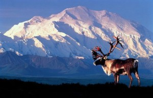 Denali National Park. Photo- alaska-in-pictures.com