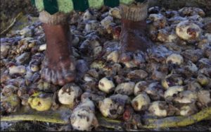 Closeup of Indigenous woman stepping on potatoes, preparing them for freeze dry-Image Source- Huff Post